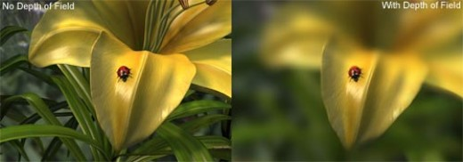 Depth of field - Example photo.