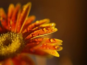 Flower macro - Photo credit Hamser