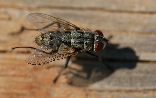 Fly fly - Photo credit V Jacinto