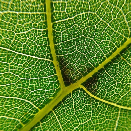 Leaf macro - Photo credit K Rhine