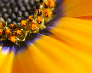 How to do macro photography with Samsung Galaxy S5 – macro tutorial.