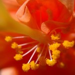 Red flower macro - Photo credit K Rhine