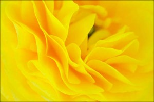 Closeup flower macro - Shot with Fujifilm 60 mm Macro lens - Photo credit C Dodkin