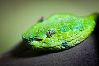 Snake head macro - Photo credit Carlos Pravia Jacamo