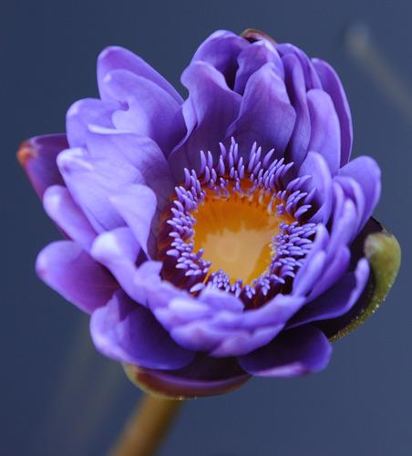 Flower - Nikon 105mm - Photo credit Andres Rojas.
