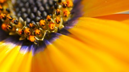 Macro flower - Photo credit CC Smith