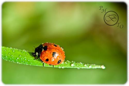 Nature macro - Photo credit Bader