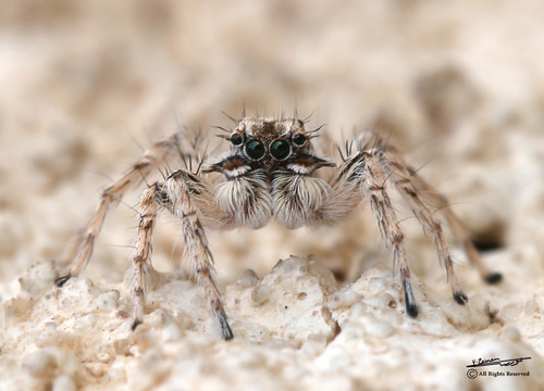 Spider macro - Photo credit Scorpio