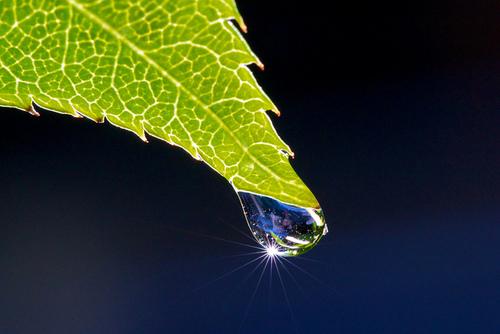Water Drop macro - Photo credit E. L.
