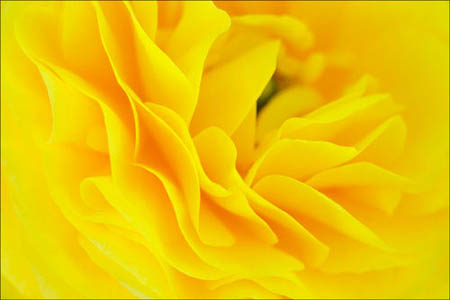 Closeup flower macro - Shot with Fujifilm 60 mm Macro lens - Photo credit C Dodkin