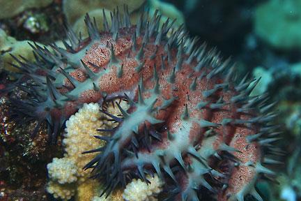 Underwater macro - Photo credit DSP